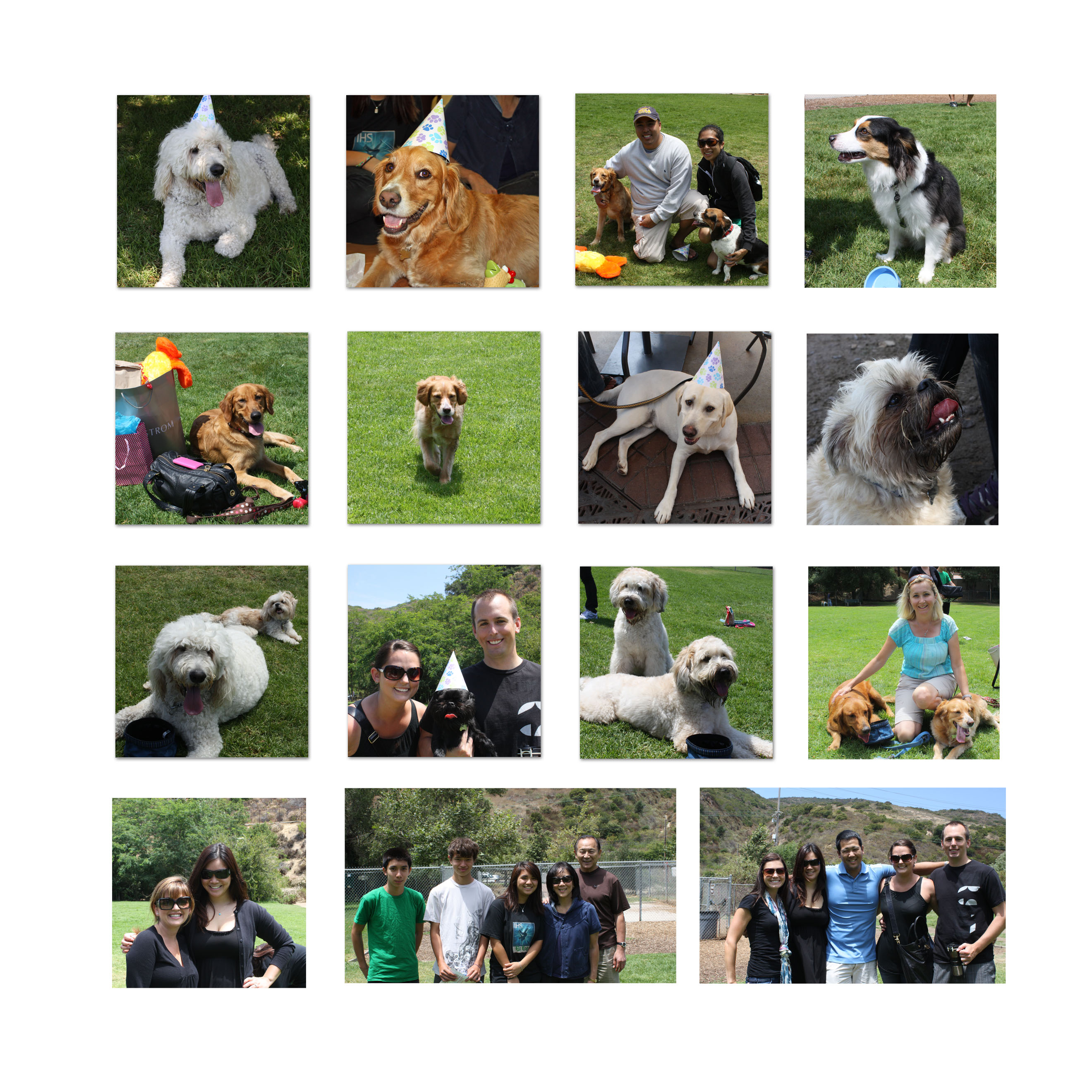 doggie party collage