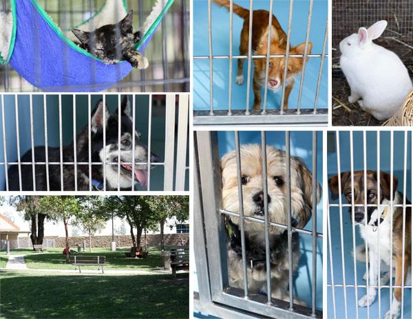 irvine animal shelter