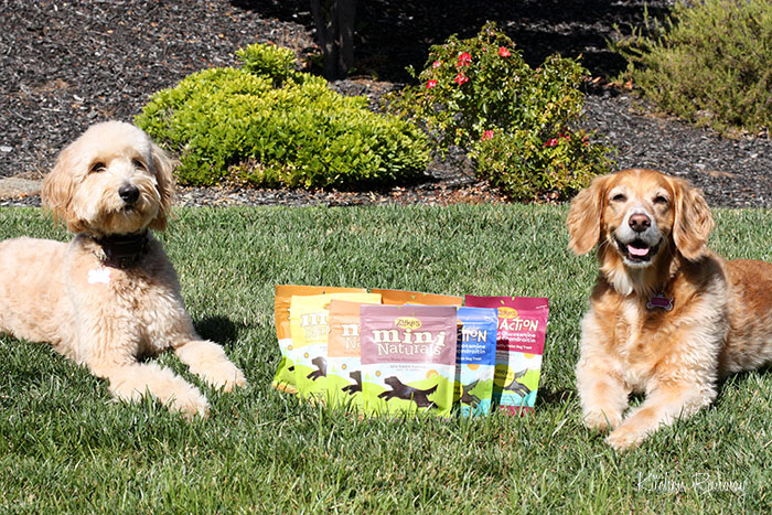 zoey &amp; taylor zuke's healthy dog treats